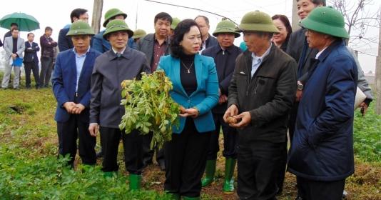 Kiểm tra công tác sản xuất nông nghiệp và phòng chống dịch bệnh tại Thạch Thất