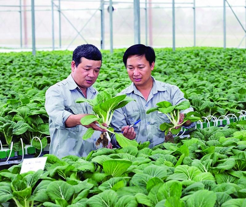 Mô hình nông nghiệp công nghệ cao của Tập đoàn VinGroup