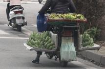 Xác minh, xử lý cán bộ liên quan vụ cưỡng chế xe bán rau tại Hạ Long