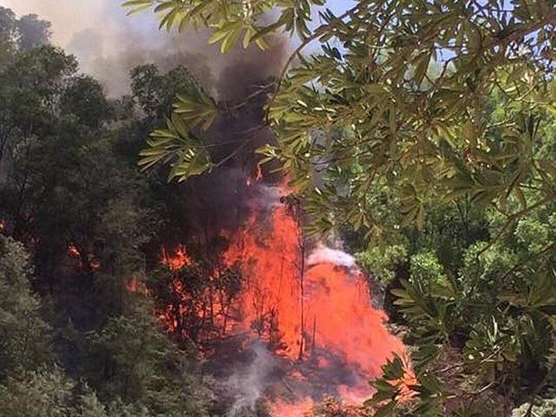 Cháy rừng do đốt vàng mã ở Nghệ An (ảnh internet)
