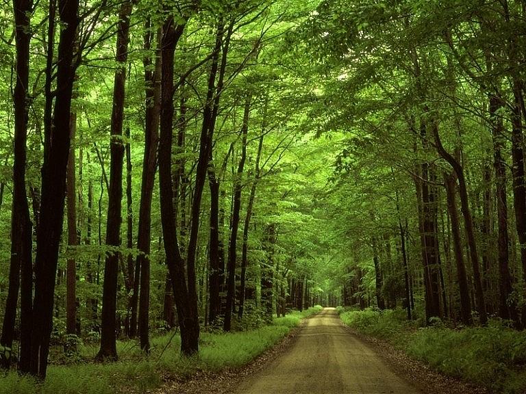 Khu bìa rừng của Nam Cát Tiên (Nguồn: Timeoutvietnam)