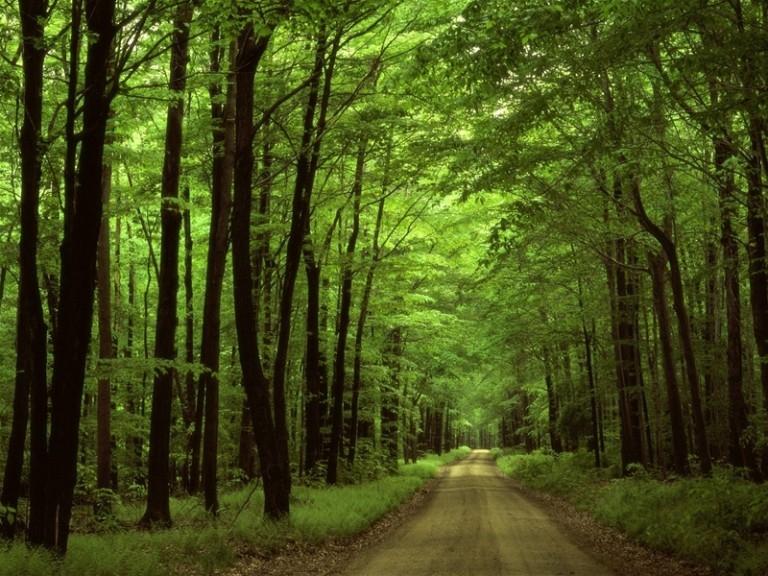 Xem xét trách nhiệm của các tổ chức, cá nhân nếu diện tích rừng tự nhiên giảm