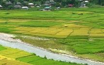 Chuyển trên 33ha đất trồng lúa sang đất phi nông nghiệp ở Long An