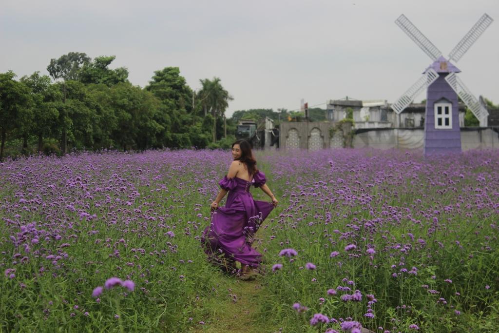 Nhiều bạn trẻ rất thích thú với vườn hoa oải hương