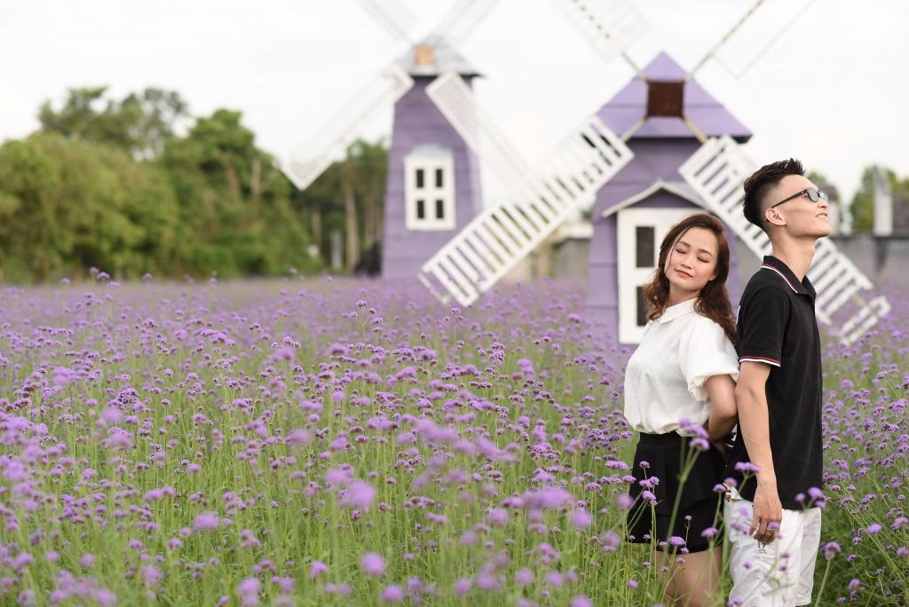 Nhiều cặp đôi chọn cánh đồng oải hương thảo là địa điểm chụp ảnh kỉ niệm, ảnh cưới