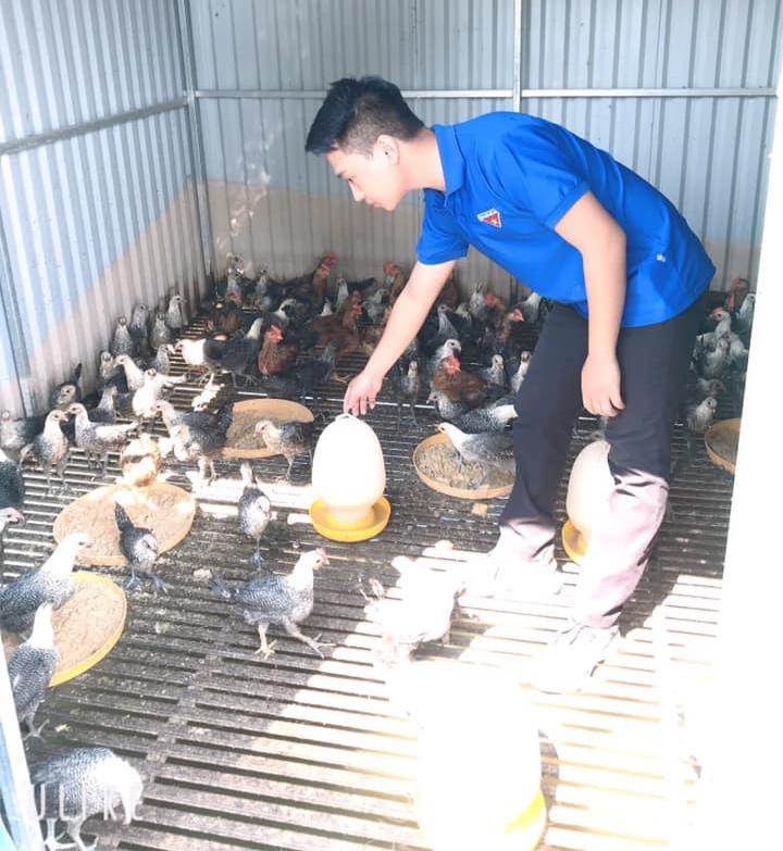 Hiện Bằng đang nuôi gà đẻ Ai Cập theo hướng sinh học
