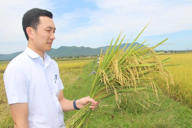 9X bỏ việc an nhàn về quê chế biến gạo, thu hàng chục tỷ đồng mỗi năm - 2