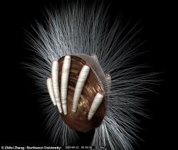 Phát hiện ký sinh trùng trong hóa thạch 512 triệu năm