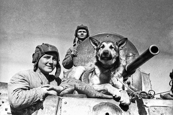 """Những """"người lính"""" bốn chân quả cảm của Liên Xô"""