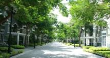 Hà Nội tăng cường bảo vệ hệ thống cây xanh