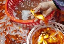 Chợ đầu mối xuyên đêm bán cá chép đỏ