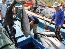 Doanh nghiệp thủy sản muốn vay với lãi suất 0% vì dịch Covid-19