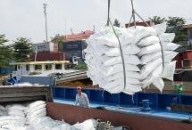 Bắt đầu thanh tra xuất khẩu gạo