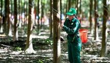 tap doan cao su giao 350 ha trong 2100 ha lam san bay long thanh