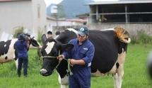 Công ty sở hữu Sữa Mộc Châu tự tin tăng gấp đôi lợi nhuận