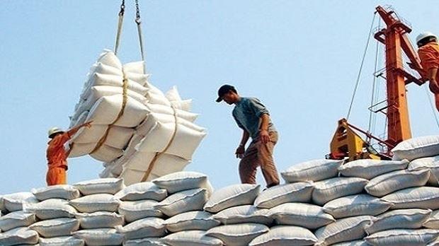 Gạo Việt Nam bị cạnh trạnh lớn bởi gạo Thái Lan, Ấn Độ