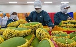 Nông sản Việt Nam giảm mạnh xuất khẩu sang Trung Quốc