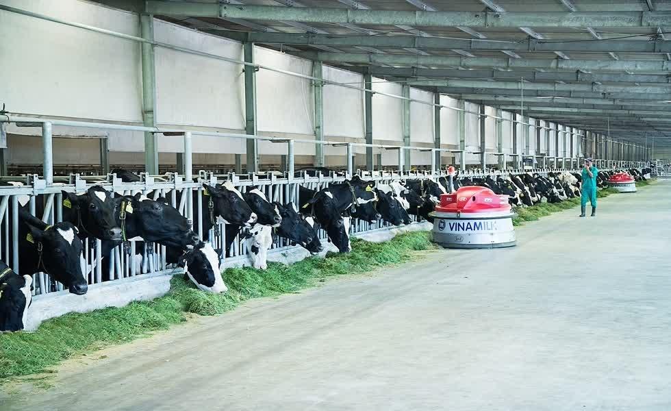 Vinamilk rót thêm 41 triệu USD vào dự án bò sữa tại Lào
