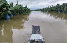 Bầu Đức nhận tin buồn: 1.500 ha trái cây tại Lào bị ngập lụt