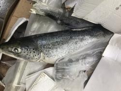 Doanh nghiệp ở Đồng Nai chế biến 2,5 tấn cá hồi hết hạn sử dụng để xuất khẩu