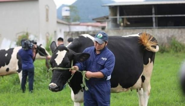 Mộc Châu Milk lên sàn UPCoM với giá 30.000 đồng/cổ phiếu