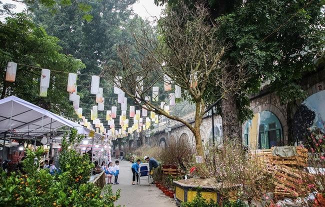 Cây hoàng mai rừng 120 năm tuổi, giá 4 tỷ đồng tại chợ Tết phố cổ