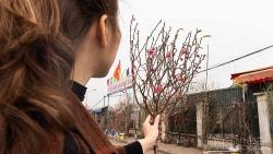 Nhộn nhịp chợ hoa những ngày giáp Tết Nguyên đán 2021