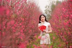 Vườn đào Nhật Tân nở rộ hút giới trẻ tới chụp ảnh