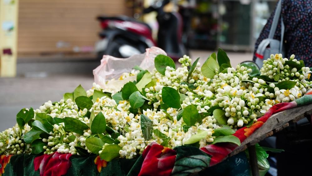 Hà Nội: Hoa bưởi xuống phố đón rằm tháng Giêng