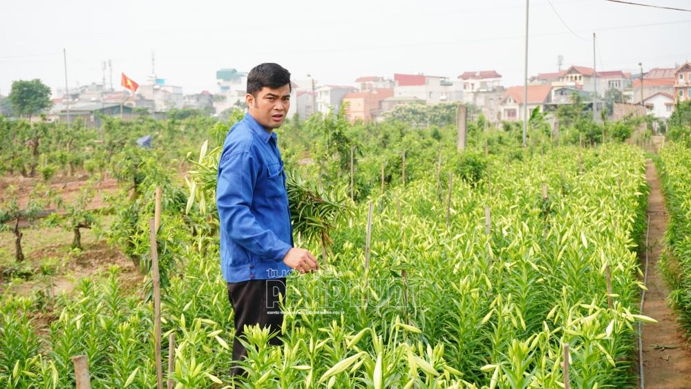 Nông dân hối hả thu hoạch trong