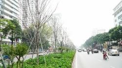 Hình ảnh cuối cùng của hàng phong trên đường Nguyễn Chí Thanh