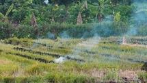 Thủ tướng Chính phủ đồng ý việc chuyển mục đích sử dụng đất tại 3 tỉnh