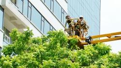 Hà Nội tổng kiểm tra toàn bộ cây xanh