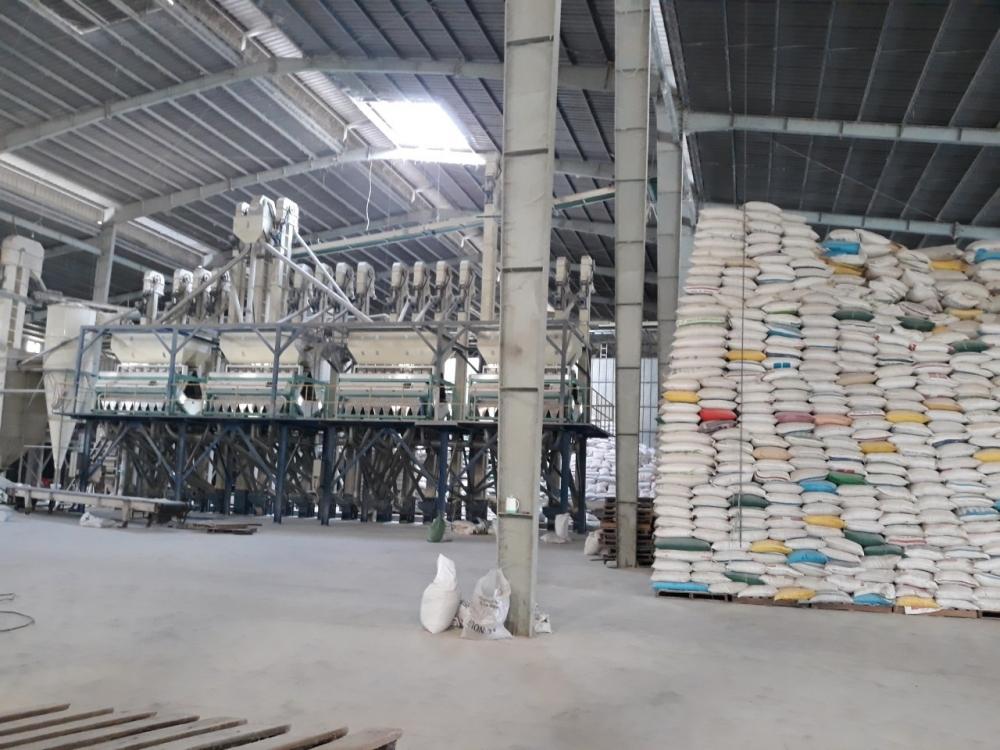 Góc khuất đấu thầu gạo dự trữ quốc gia