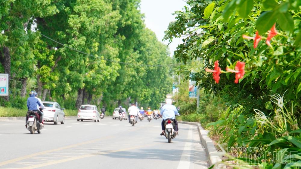 Phượng tím - đặc sản Đà Lạt trổ bông bên bờ sông Tô Lịch