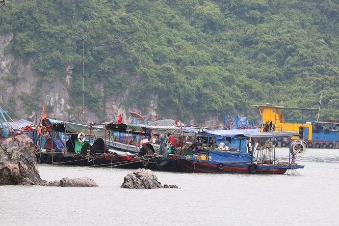 Hơn 20 nghìn tàu bè ở Quảng Ninh được neo đậu tránh bão Wipha