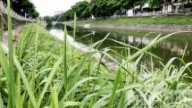 Cải tạo ô nhiễm sông Tô Lịch, sông Nhuệ: Sẽ lắp 8 trạm bơm dã chiến