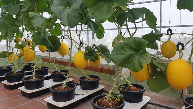 Gia đình trẻ biến sân thượng trống thành 'khu vườn trên mây' - ảnh 4