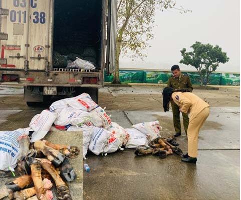 Thanh Hóa: Bắt giữ xe tải vận chuyển gần 1 tấn chân trâu, bò không rõ nguồn gốc