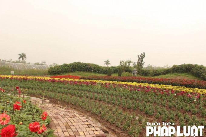 Hoa ở nơi đây được trồng đan xen, tạo nên hình khối đủ màu sắc rất đẹp.