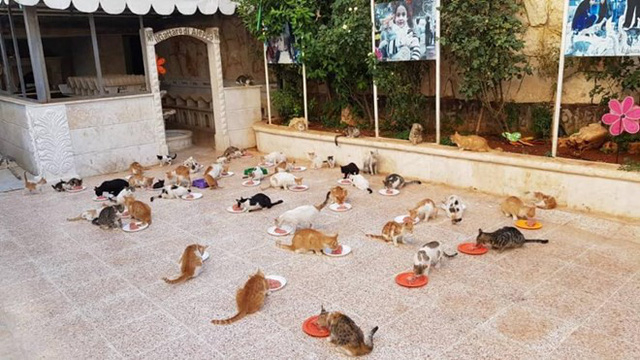 (Nguồn: Alaa and house of Cats Ernesto in Aleppo).