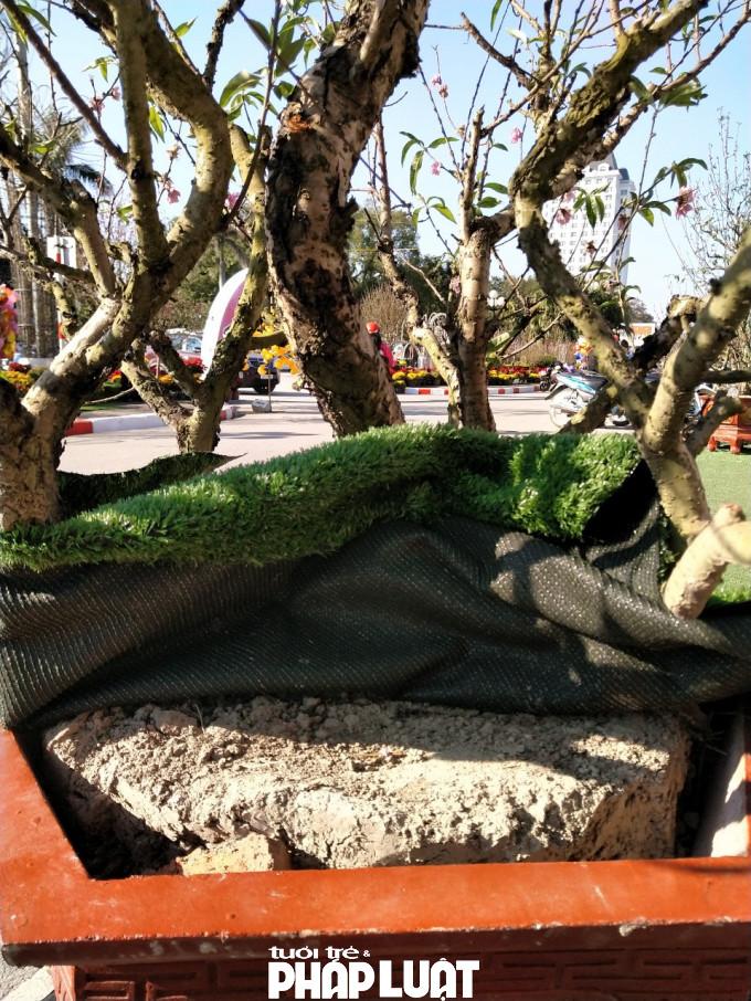 Bên dưới những tấm thảm nilon giả cỏ là bầu đất khô kiệt