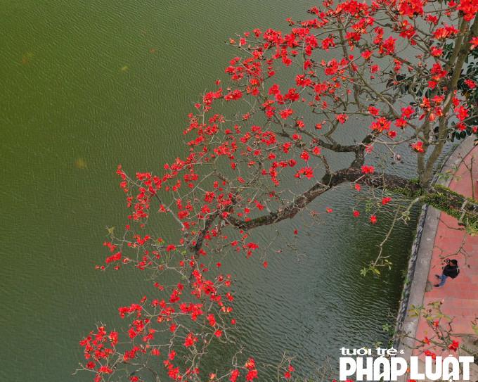 Hoa Gạo đỏ rực như những đốm lửa trên nền nước xanh đủ làm xao xuyến bất kỳ ai