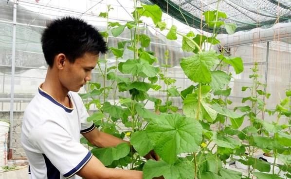 Cựu sinh viên Bách Khoa khởi nghiệp bằng mô hình trồng rau sạch thu hàng trăm triệu mỗi năm.