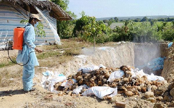 Không phát sinh thêm ổ dịch cúm A/H5N6 mới ở Thanh Hoá