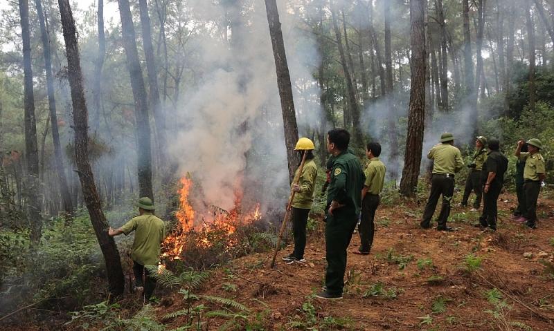 Thanh Hóa: Tăng cường công tác bảo vệ rừng tại huyện Hà Trung