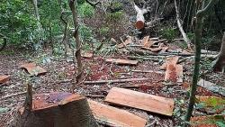 Nạn phá rừng và những hệ lụy