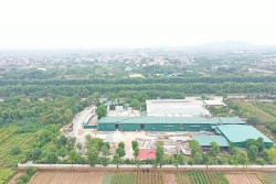 Nhà xưởng xây dựng trái phép tràn lan tại xã Song Phương, huyện Hoài Đức