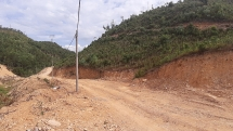 Đà Nẵng: Vào rừng đốn cây, người đàn ông bị ong đốt tử vong