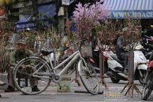 Chợ hoa Hàng Lược - kí ức Tết trăm năm